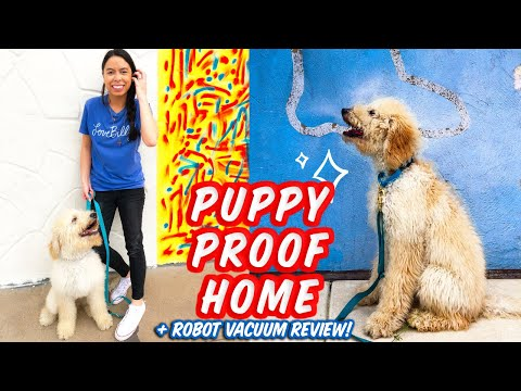PUPPY PROOF Home // Puppy Hacks! + Neato Botvac d7 Review