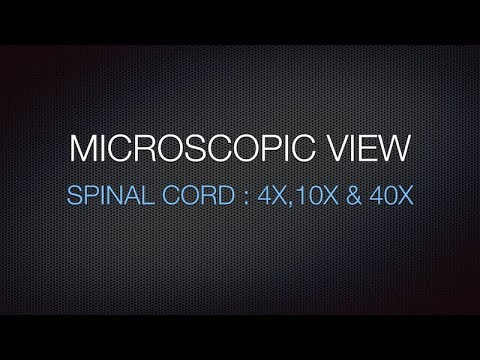 MICROSCOPIC VIEW - SPINAL CORD