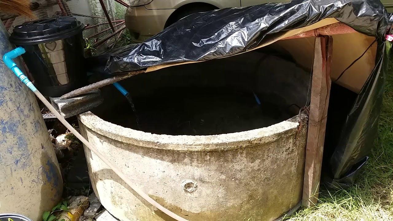 เลี้ยงปลานิลวงบ่อ พร้อมระบบน้ำวน