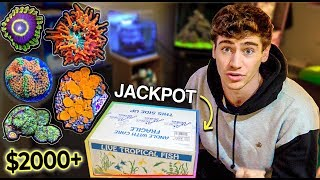 UNBOXING THE MOST RARE EXPENSIVE CORAL I'VE EVER OWNED!!!