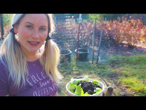 Composting For Beginners | Gardening Tips & Tricks