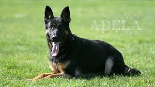 Nike Vikar - Obedience And Protection