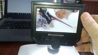 Микроскоп для Пчеломаток ИО - под электронным usb микроскопом фото и видео
