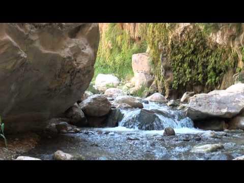 Wadi Bin Hammad Tropical Rain Forest Trail - Video - Hiking In Jordan