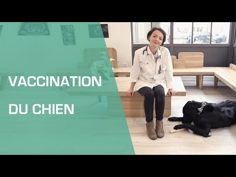 La Vaccination Du Chien - Animaux