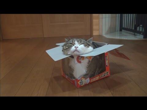 Katze in winzigem Karton