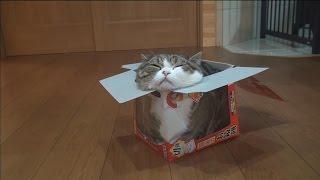 鏡もち箱とねこ。-Round rice cake box and Maru.-