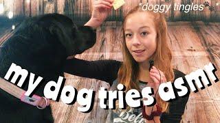 MY DOG TRIES ASMR!!