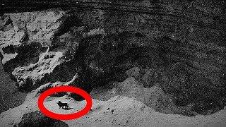 5 Последних Фотографий Недавно Исчезнувших Видов Животных