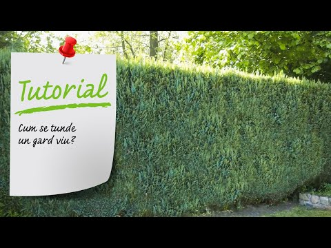 Cum Se Tunde Un Gard Viu? Ghid Video Tundere Gard Viu - Leroy Merlin Romania
