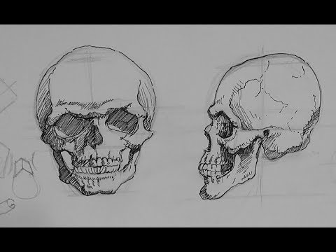Pen and ink drawing tutorials how to draw a skull in ink youtube pen and ink drawing tutorials how to draw a skull in ink ccuart Image collections