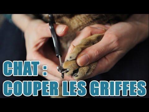 Couper Les Griffes D'un Chat Avec Une Coupe Griffe Plutôt Qu'avec Un Coupe Ongle