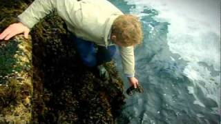 Gordon Ramsay goes Lobster Fishing with Jeremy Clarkson - The F Word