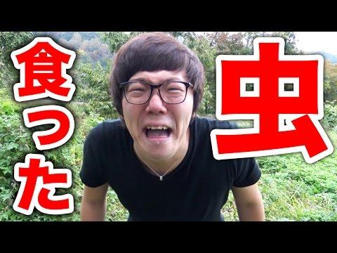 【閲覧注意】虫食べちまった!巨大毒クモ紹介!