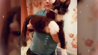 Мейн-кун котенок 4 месяца вес 4400