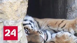 Московский зоопарк приглашает посмотреть на ночных животных - Россия 24