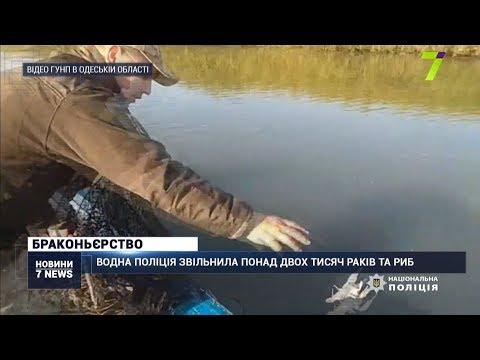 Новости 7 канал Одесса: Водна поліція врятувала понад дві тисячі раків та риб