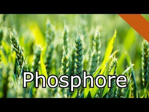 Le Phosphore MaP#27