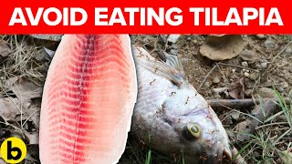 Why Health Experts Say Not To Eat Tilapia & Salmon