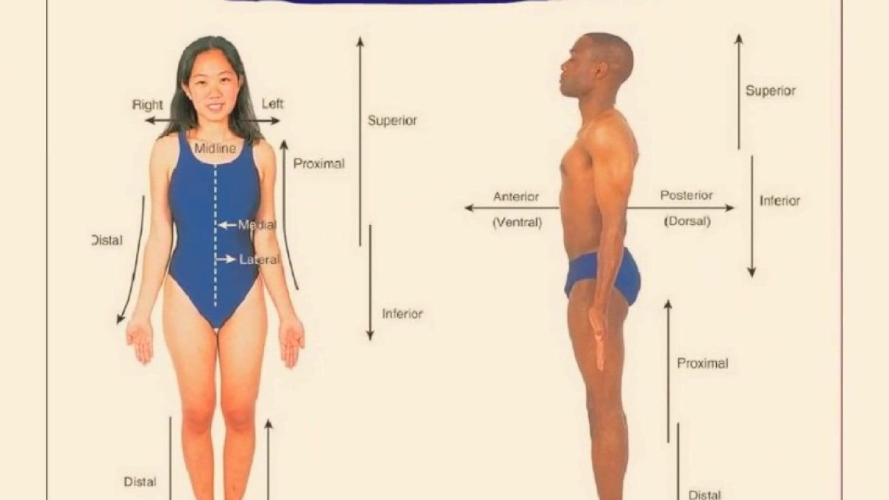 Introduction To Anatomy Physiology The Human Body Ppt Youtube