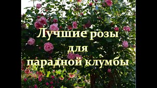 Лучшие розы для парадной клумбы.