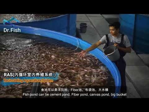 Dr. Fish - Recirculating Aquaculture System (RAS) 室内养殖系统