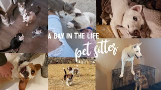 DAY IN THE LIFE as a PET SITTER! | 2020