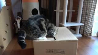 箱とまるとはな2。-Box and Maru&Hana2.-