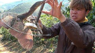 Bẫy Chim Ăn Quả Bất Ngờ Được Hàng Khủng | Dân Tộc Tây Bắc Tv