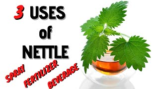 How to use the nettles - 3 very useful uses