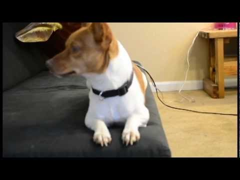 how to get rid of my dogs hiccups