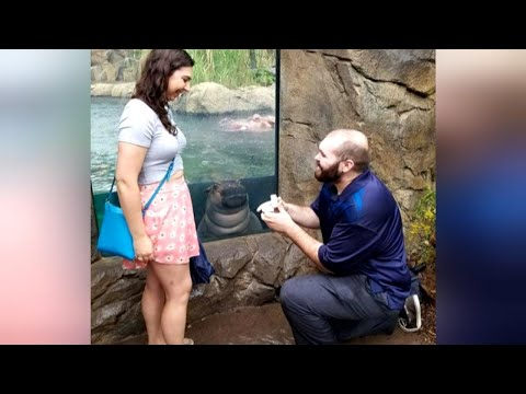 Katie Sommers - OMG: Fiona The Hippo Photobombs Proposal Pics
