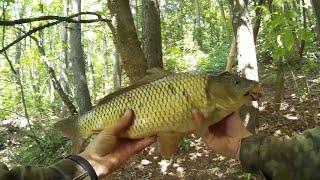 Риболовля на боковий кивок Короп на боковий кивок Короп на літню мормишку
