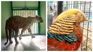 Watch: White tiger, gharial and exotic birds reach Indore zoo