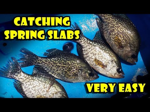 Easy Crappie Fishing With A Float In Shallow Lakes (spring Crappies)