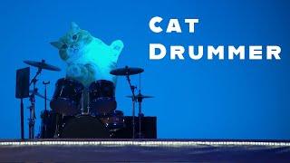 Cat Drummer !? 短足猫のマンチカンがドラムを叩いてみたら【マンチカンズ】