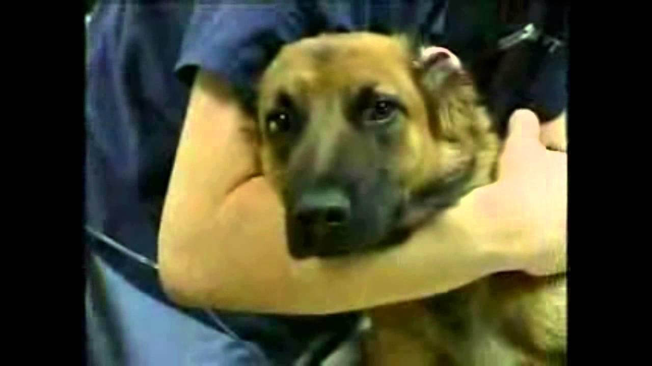 aspca animal cruelty commercial very sad sarah mclachlan youtube