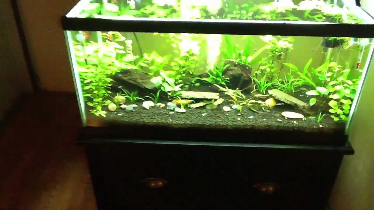 Planted tank 40 gallon breeder youtube for Standard fish tank sizes