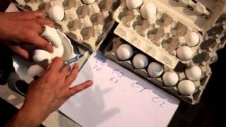 Сколько весят яйца