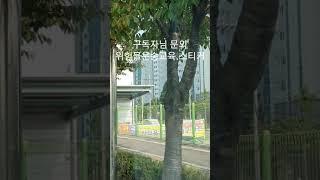 (1톤화물용달)구독자님 문의.위험물운송자격증.스티커?