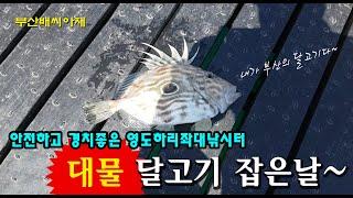 부산영도 좌대낚시터에서 대물 달고기를 만나다~![부산배…