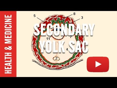 what-is-secondary-yolk-sac
