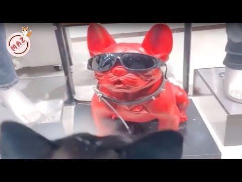 Tik Tok Dog, Cat, Animals - Cute Funny Pets Videos #22
