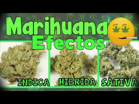 MARIHUANA: EFECTOS DE INDICA,HIBRIDA Y SATIVA