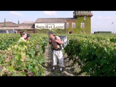 Château Smith Haut Lafitte - Insight into Bordeaux Wine Excellence