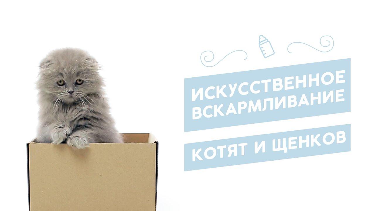 Котёнка инвалида выбросили на мороз в - 40 остеохондродисплазия .
