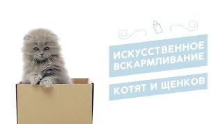 Искусственное вскармливание котят и щенков