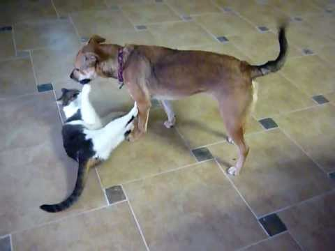 dog and cat play fighting wrestling youtube. Black Bedroom Furniture Sets. Home Design Ideas
