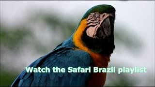 Beautiful Wildlife of Brazil