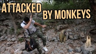 ATTACKED BY MONKEYS ON A HIKE!
